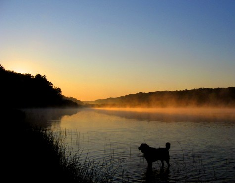 Nero seems to be watching the sun burn the morning fog off of Muskegon County's Duck Lake on July 6, 2007