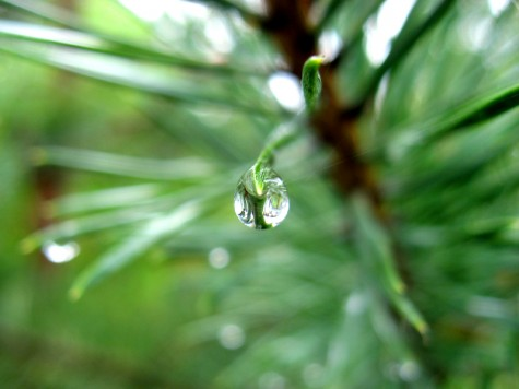 A post-storm raindrop at Muskegon County\'s Duck Lake State Park on June 2, 2007