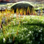 Frosty moss along the Muskegon River delta on January 8, 2012