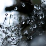 Dew drops, March 16, 2012